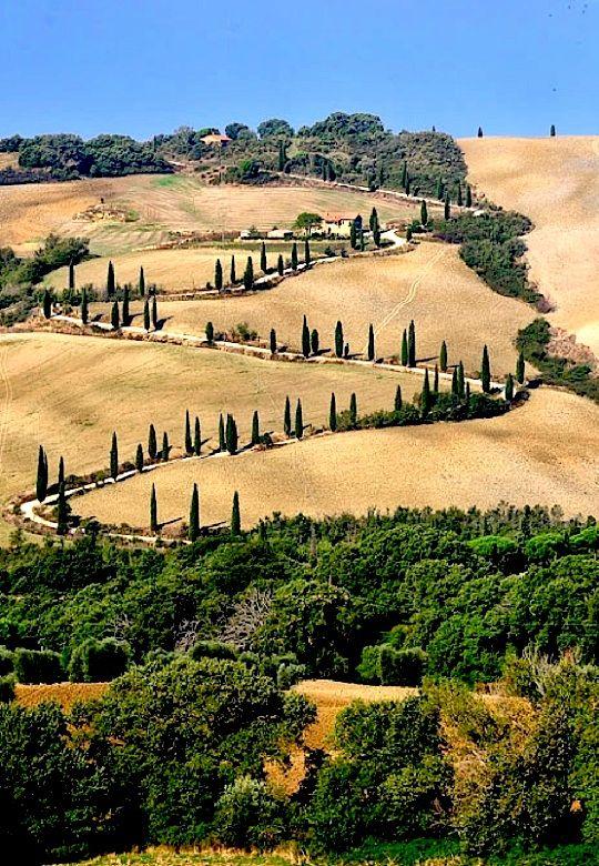 ~Cypress hills - La Foce, Tuscany~Chianciano Terme Siena Italy