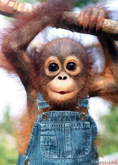 Just hanging' in my overalls.