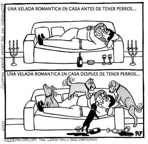 Velada romántica con #perros. #Humor