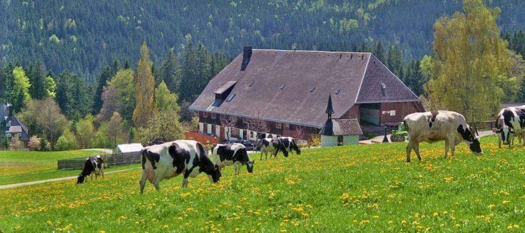 Weberhof - Ferienwohnungen auf dem Bauernhof in Hinterzarten am Titisee Schwarzwald