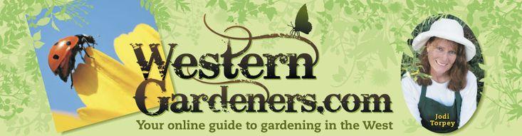 Roasting Tomatoes Preserves Gardening Flavor | Fall Gardening Harvest and Roasted Tomatoes