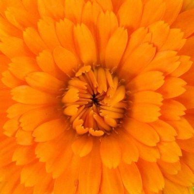 Orange is the happy color, Frank Sinatra said. I agree.