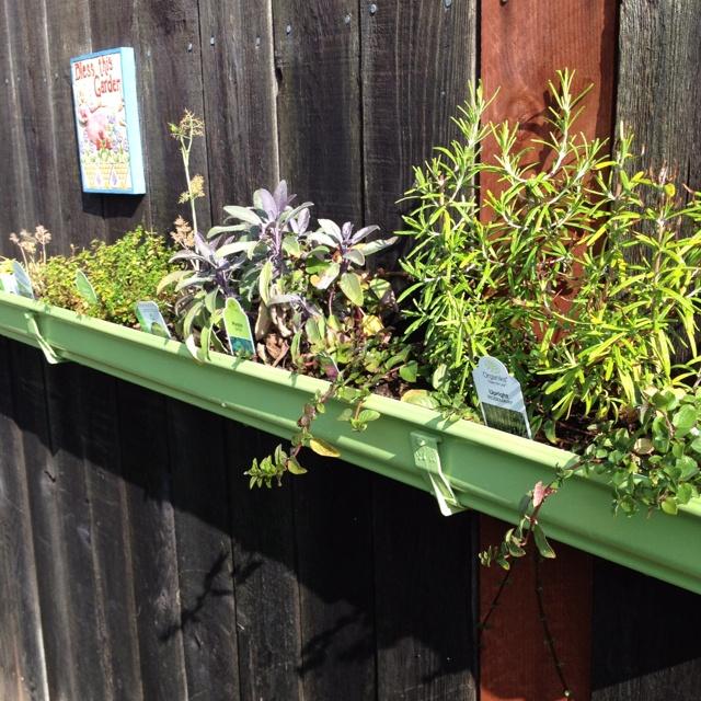 Top 32 Diy Fun Landscaping Ideas For Your Dream Backyard: 15 Best Rain Gutter Gardening Images On Pinterest