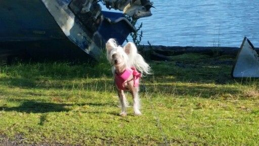 Olivia - the summer dog