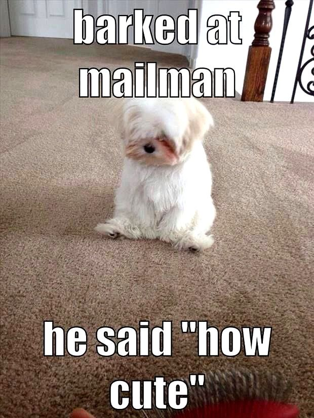 Laughing So Hard Dog Meme Dog Meme Life Dog Quotes Funny Dog Memes Dog Quotes