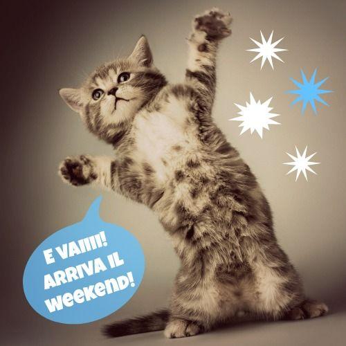 Arriva il weekend: chi fa festa come questo gattino??