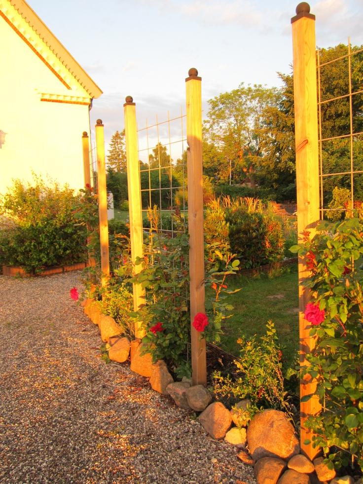 Et kig fra parkeringsplads til haven gennem roser. Med tiden vil mellemrum vokse til i stedsgrønne buske.
