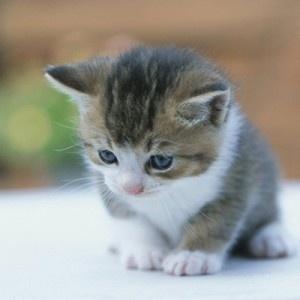 Írj le 100 szót, ha szereted a cicákat!
