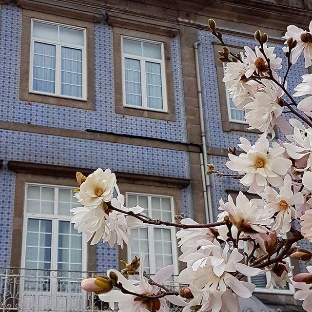Pasaron ya los días de Oporto: de todas maneras, durante los próximos días subiré más fotos de esta estancia. Ahora, lunes de realidad. -- With the bloomed trees and the tiles from #oporto I greet the New week.  Let's face Another side of reality.