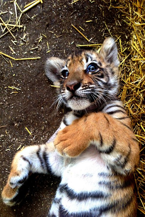 4915 Best Images About For The Love Of Animals On