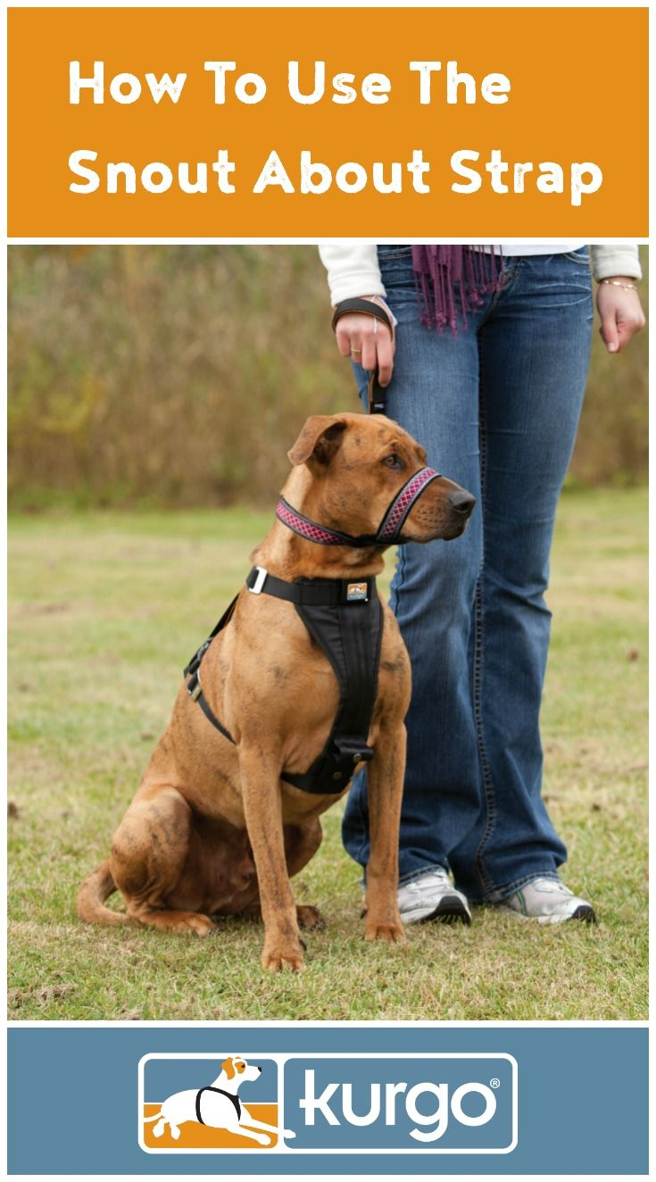 Are you looking for a comfortable head halter to help reduce undesired behaviors? Our Snout About Strap will let your dog eat and drink normally and is made from a flexible yet sturdy fabric.