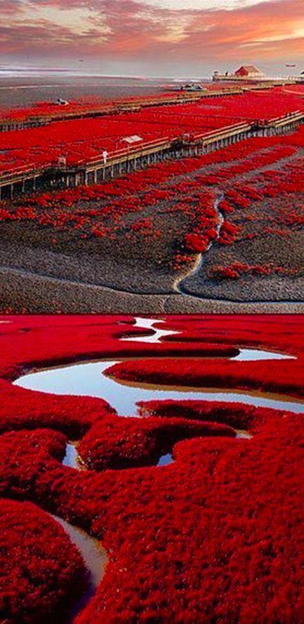 Playa roja en Panjin, China en las marismas del delta del río Liaohe