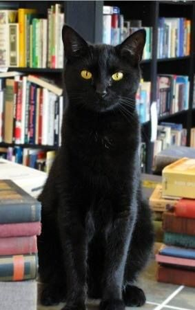 "* * KITTEH: "" I sitz before yoo; de librarian's assistant. I already knowz wut books yoo be interested in:' Superstitions.' """