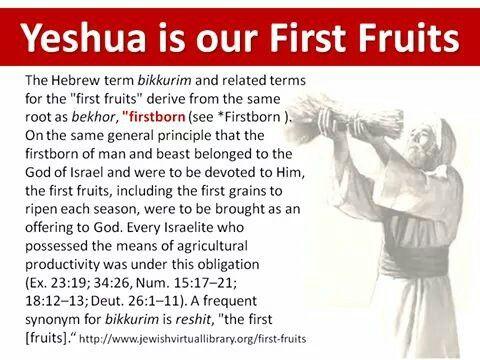 Yeshua is our First Fruits - understanding bikkurim