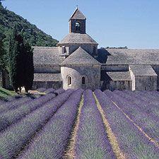 Google Image Result for http://www.ricksteves.com/images/france/luberon_lavender.jpg
