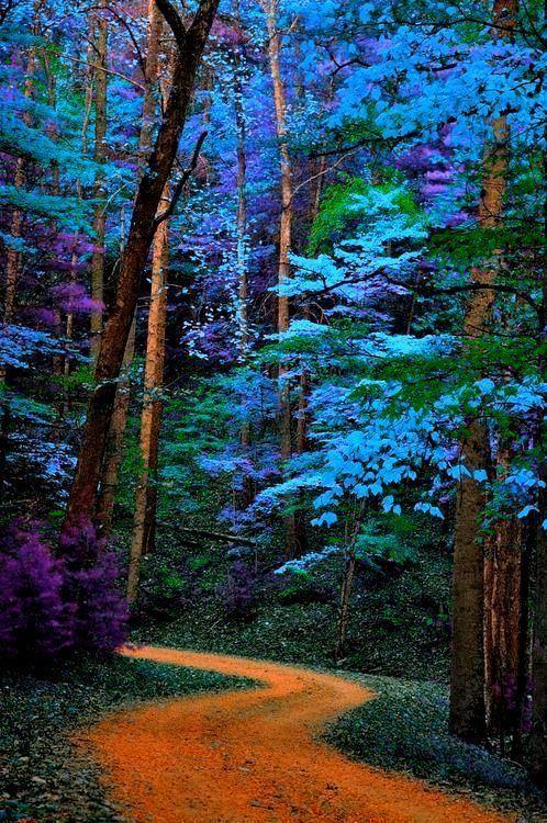 Naturaleza colorida impresionante, trayectoria azul de los árboles gran parque nacional de las montañas ahumadas, tennessee