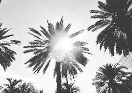 Palm Trees Tumblr Black And White