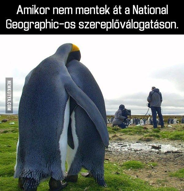 Pingvinek és a szereplőválogatás :)