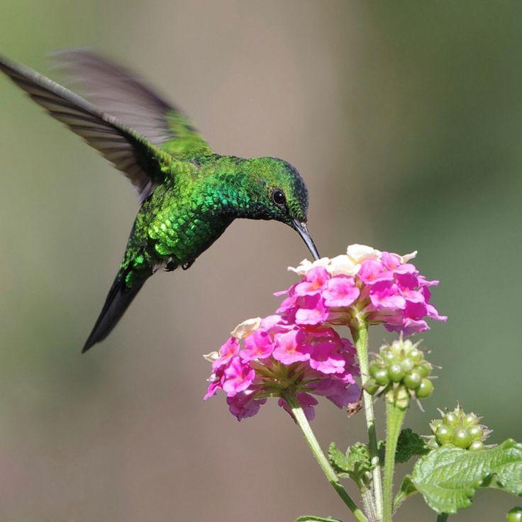 5 Best Pink Flowers for Hummingbirds Downloadable