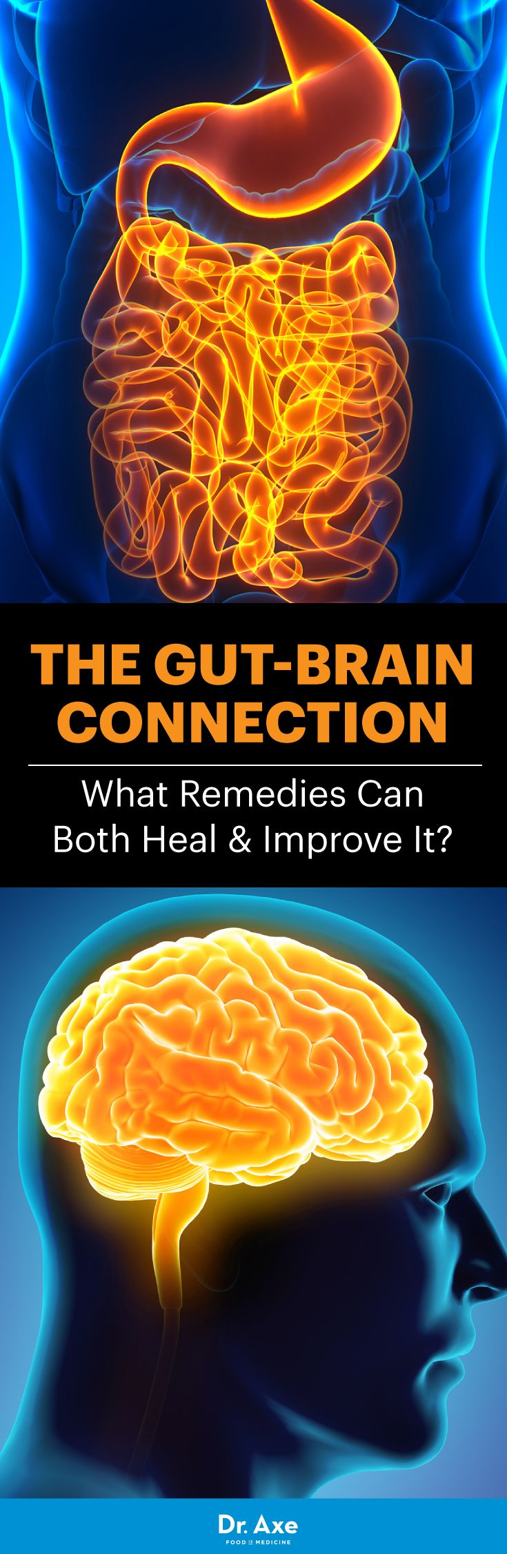 "gut-brain connection You've probably used the phrases ""I have butterflies in my stomach,"" ""I have a gut feeling about this"" or ""there's a pit in my stomach."" Have you ever wondered why so many of these sayings involve our brains and tummies?"