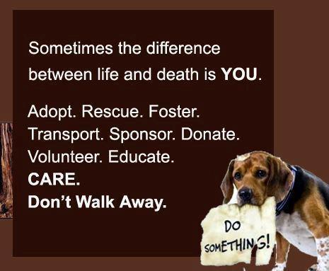 rescue animal