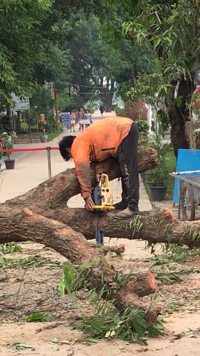 Chainsaw safety #forklift #osha #forkliftlicense