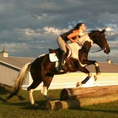 Horse for Lease Sell | Female Thoroughbred in Maple Lake MN | 3569980172 | Horses on Oodle Marketplace