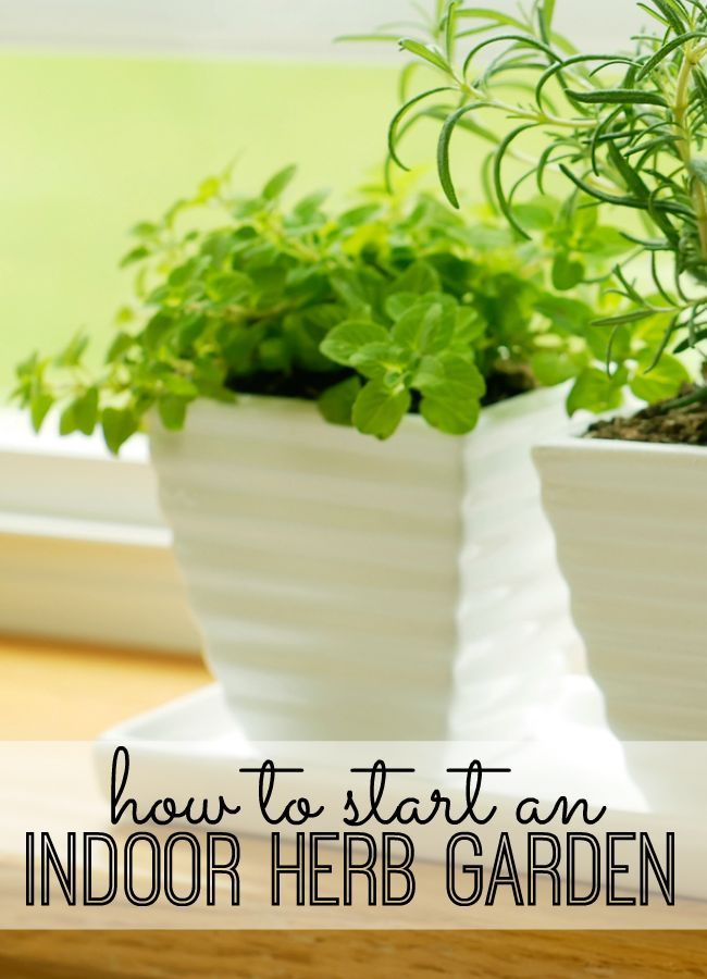 Starting an indoor herb garden requires a little planning, a lot of sunlight, and regular care, but it's definitely worth it. Whether you're starting an indoor herb garden with the hopes of moving it outdoors in warmer weather, or you're planning on keeping plants indoors year-round, we've found some useful tips to get you started.