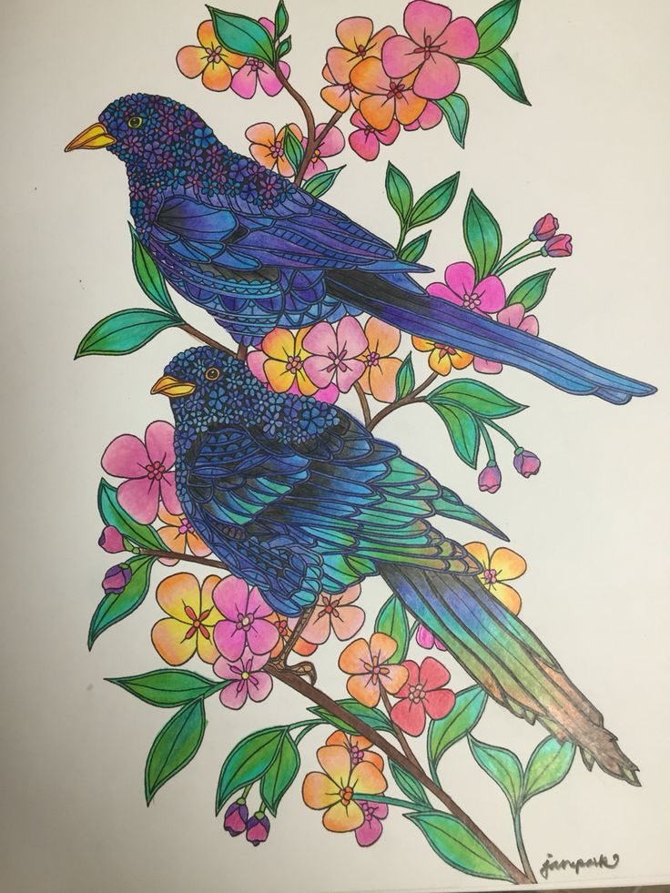 Birds Coloring Book By Georgie Woolridge. Magpie