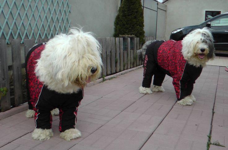 Kayla & Kadance, impozante si impresionante in Salopete de Iarna de la King Maru --> https://kingmaru.ro/  #hainecaini #accesoriicaini #imbracamintecaini #caine #caini #catel #catei #dog #dogs #kingmaru