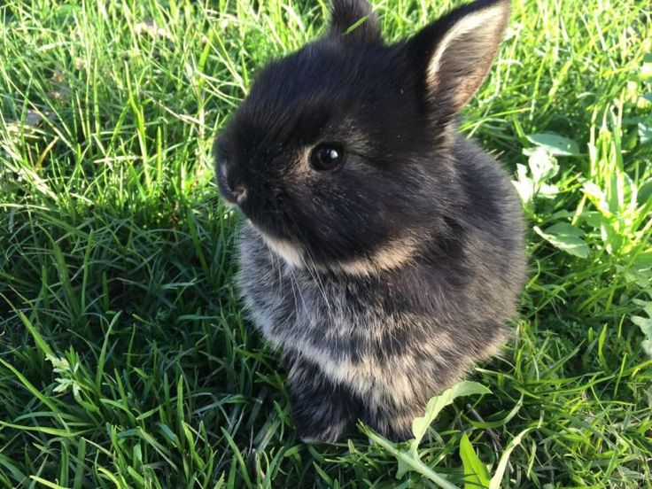 Cute Baby Rabbits For Sale | Rabbits | Gumtree Australia Canning Area - Canning Vale | 1117275225