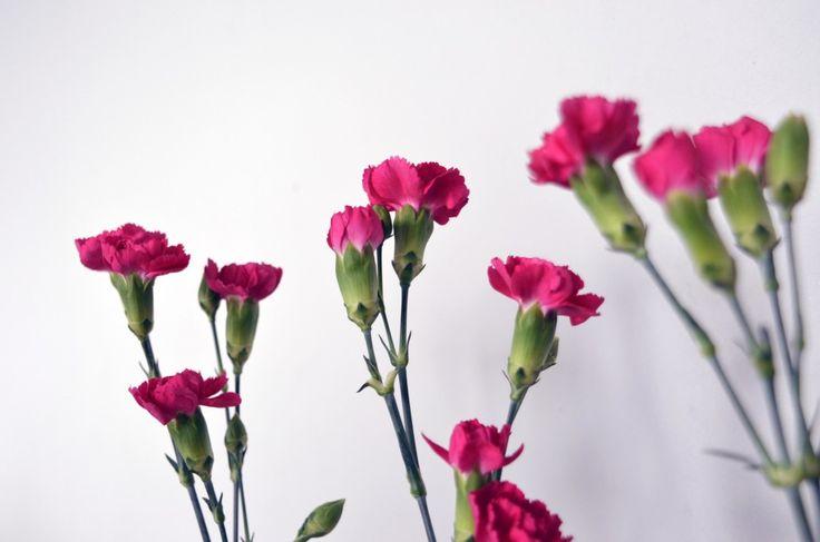 Fresh #flowers #cloves #pink