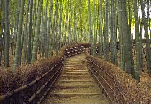 25 best ideas about Bamboo garden fences on Pinterest