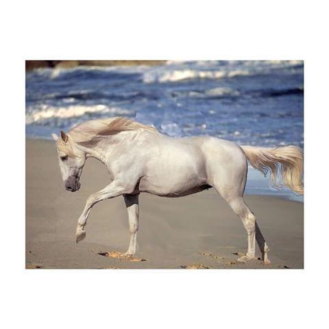 """""""Le cheval enseigne à l'homme la maîtrise de soi et la faculté de s'introduire dans les pensées et les sensations d'un autre être vivant."""" #banc#cheval#horse#gris#arabe#noir#bleu #libre#crinière #hippique #dune#free#magique#magnifique#l#equitation#le#plus#beau#sport#sable"""