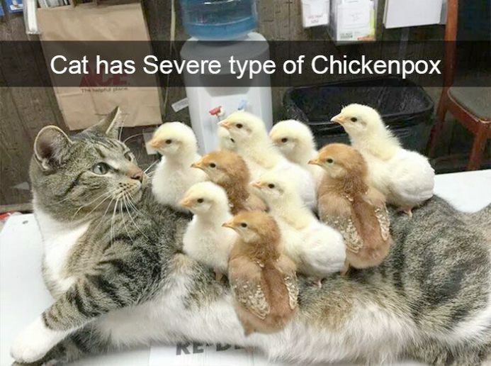 Cute Animals Pictures Pinterest Above Cats And Kittens For Sale Hampshire Whether Rescue Cats And Kittens Edinburgh Order Cute Videos Of Animal Cute Animals Funny Animal Pictures Cute Funny Animals