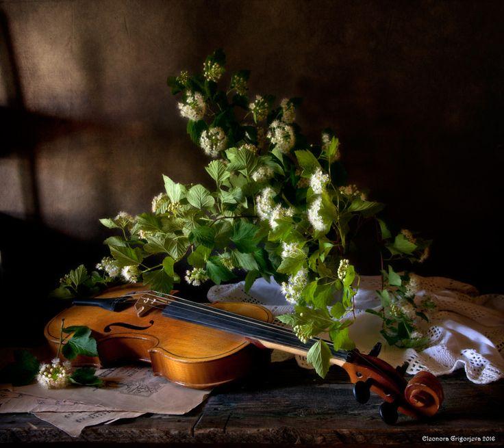 #скрипка #музыка #ноты #лето #цветы #натюрморт Photographer: Eleonora Grigorjeva