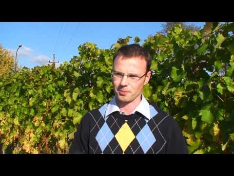 Intervjuv med Franz Schneider (Artisan Wines)