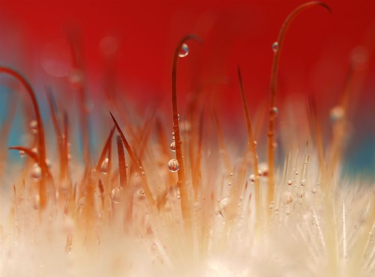 the photographer, Sandra McCabe's Micro photography a journey between abstraction, fine art and nature photography.