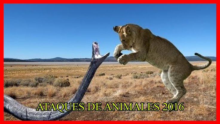 Anaconda gigante vs León vs Tigre Gran Python vs León de Lucha real - At...