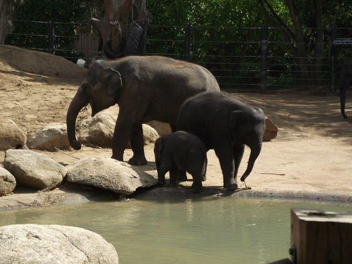 A happy elephant family