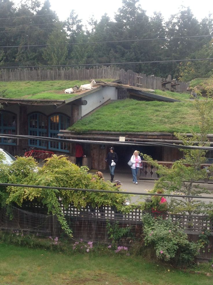 The infamous goats on the roof at tourist hot spot Coombs BC