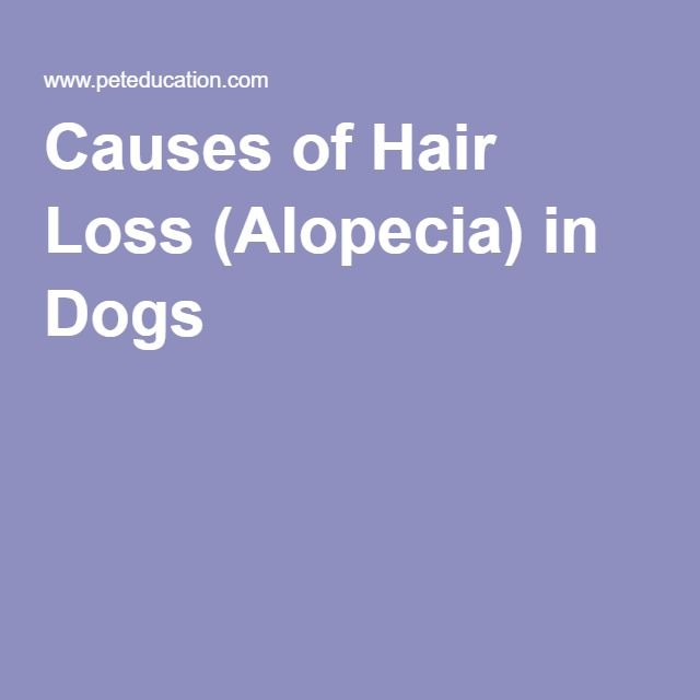 Causes of Hair Loss (Alopecia) in Dogs