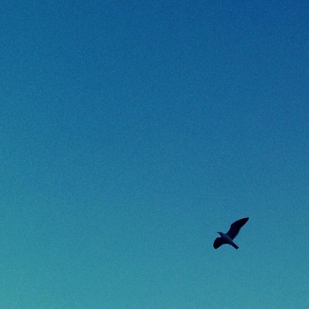 Desde el Cerro Concepción, mirando hacia el cielo! <3