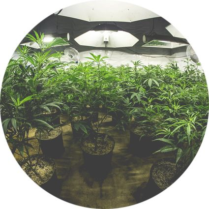 Duncan and Associates Insurance Brokers is pleased to announce a new program offering all types of business insurance for marijuana distribution companies throughout the United States. Visit www.cannabis-insurance.net for information and quotes today! Marijuana Insurance Washington State, Marijuana Insurance Oregon