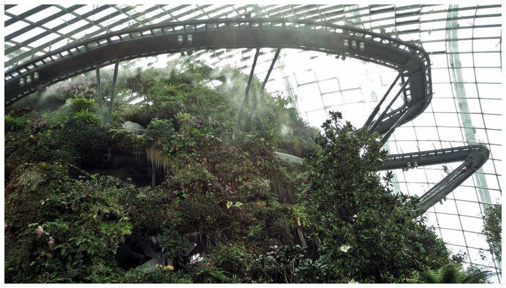 Cloud Forest