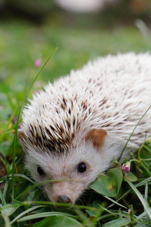 44++ Hedgehog photography info
