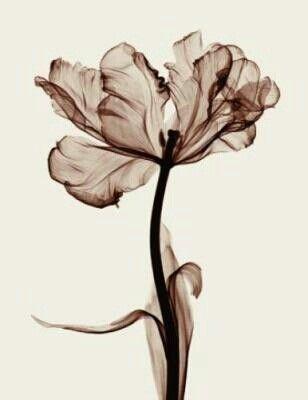 Sepia Love Flower Dreams