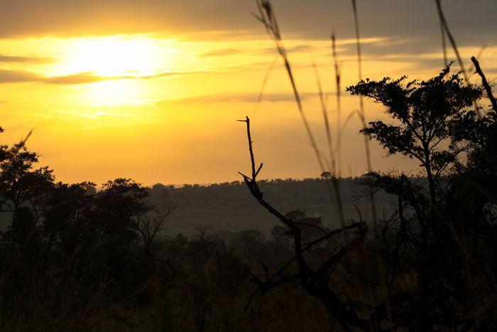 Kruger National Park - Südafrika