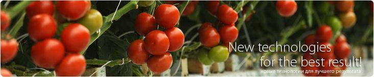 Kitano Seeds (семена Китано) - семена цветов и овощей, купить семена почтой, продажа семян. Фирма Китано.