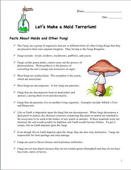 Let's Make a Mold Terrarium! Fungi lab for upper elem/middle grades.  $
